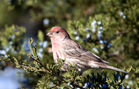 crop-image-finch